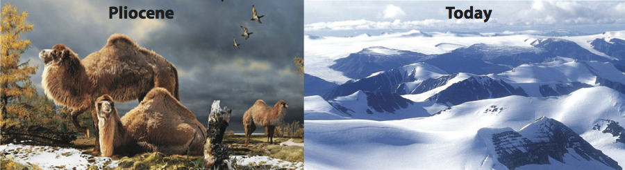 Ellesmere Island, then and now: Left: Artist's rendition of High Arctic camels on Ellesmere Island during the Pliocene (Julius Csotonyi/Canadian Museum of Nature). Right: The Osborn Range on Ellesmere Island at present day (Ansgar Walk/Wikimedia Commons).